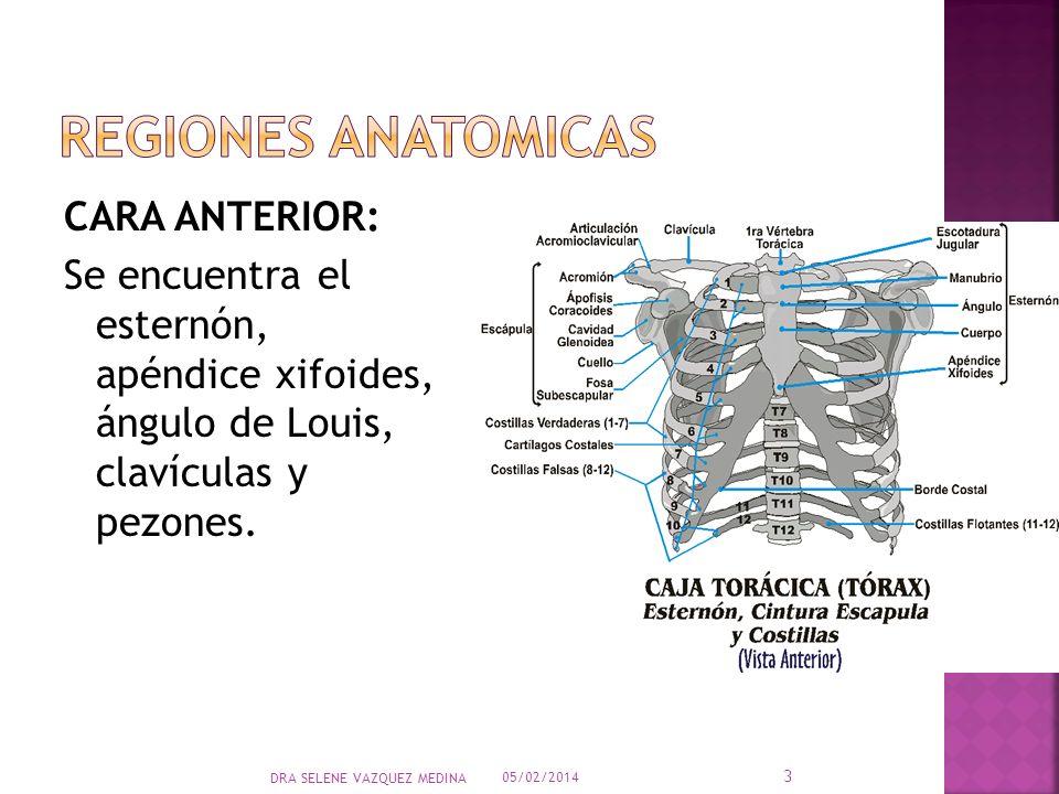CARA ANTERIOR: Se encuentra el esternón, apéndice xifoides, ángulo de Louis, clavículas y pezones. 05/02/2014 3 DRA SELENE VAZQUEZ MEDINA