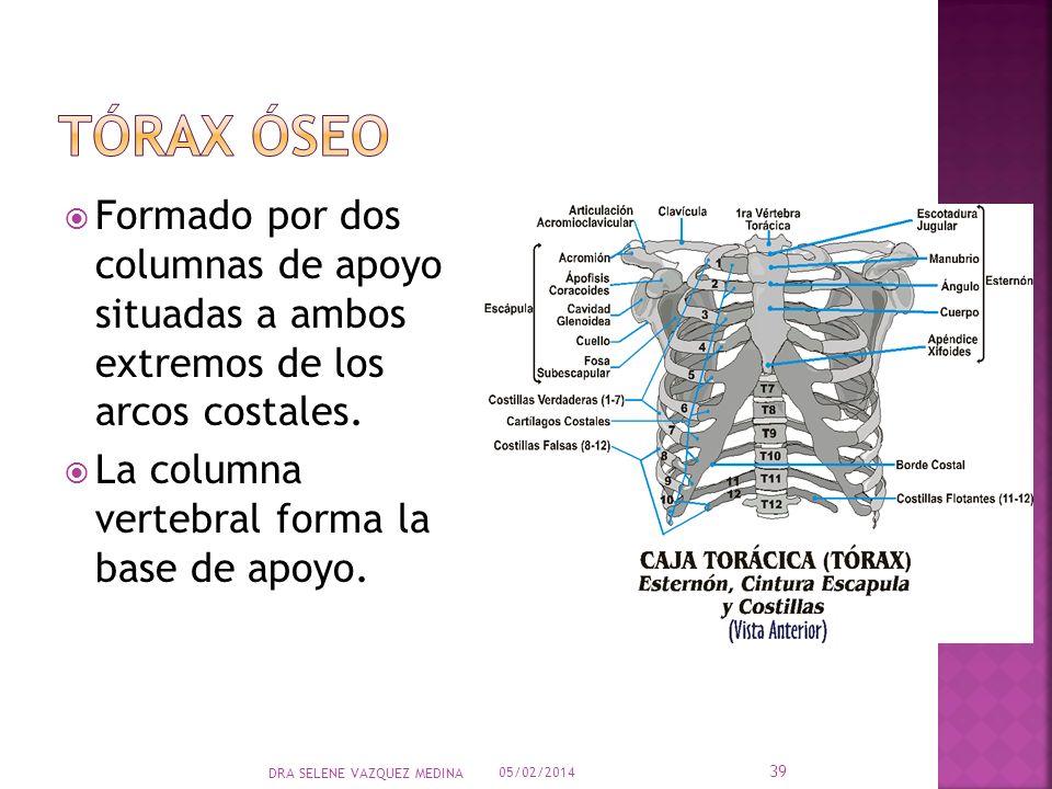 Formado por dos columnas de apoyo situadas a ambos extremos de los arcos costales. La columna vertebral forma la base de apoyo. 05/02/2014 39 DRA SELE
