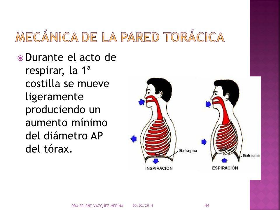 Durante el acto de respirar, la 1ª costilla se mueve ligeramente produciendo un aumento mínimo del diámetro AP del tórax. 05/02/2014 44 DRA SELENE VAZ
