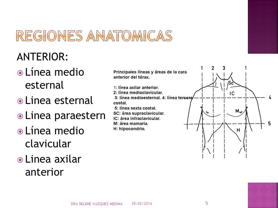 ANTERIOR: Línea medio esternal Linea esternal Linea paraesternal Línea medio clavicular Linea axilar anterior 05/02/2014 5 DRA SELENE VAZQUEZ MEDINA