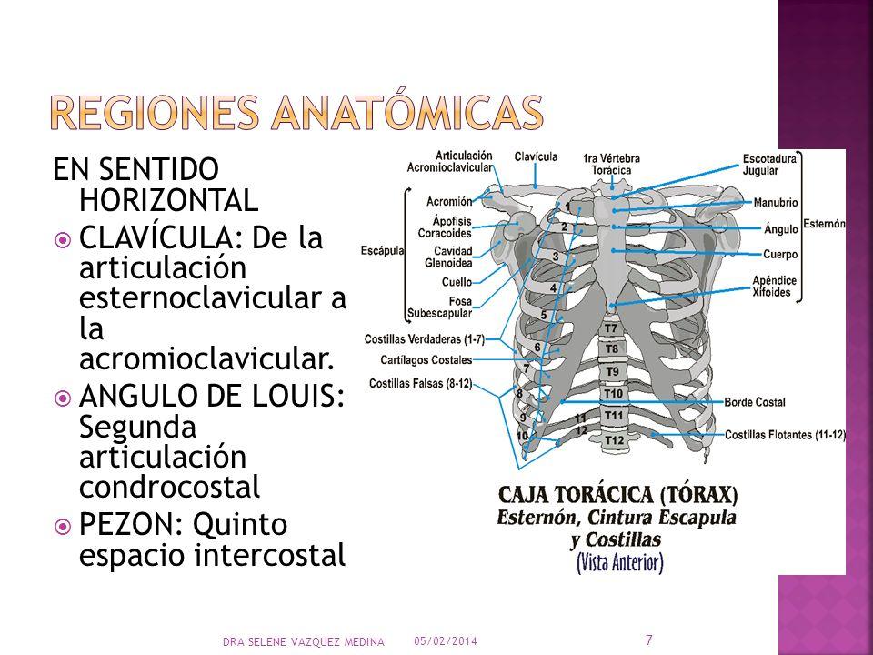 EN SENTIDO HORIZONTAL CLAVÍCULA: De la articulación esternoclavicular a la acromioclavicular. ANGULO DE LOUIS: Segunda articulación condrocostal PEZON