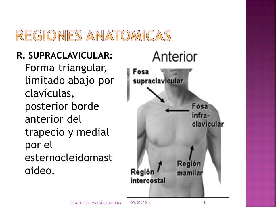 R. SUPRACLAVICULAR: Forma triangular, limitado abajo por clavículas, posterior borde anterior del trapecio y medial por el esternocleidomast oideo. 05