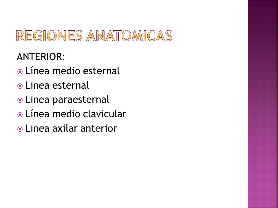 ANTERIOR: Línea medio esternal Linea esternal Linea paraesternal Línea medio clavicular Linea axilar anterior