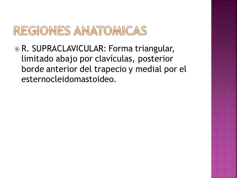 R. SUPRACLAVICULAR: Forma triangular, limitado abajo por clavículas, posterior borde anterior del trapecio y medial por el esternocleidomastoideo.