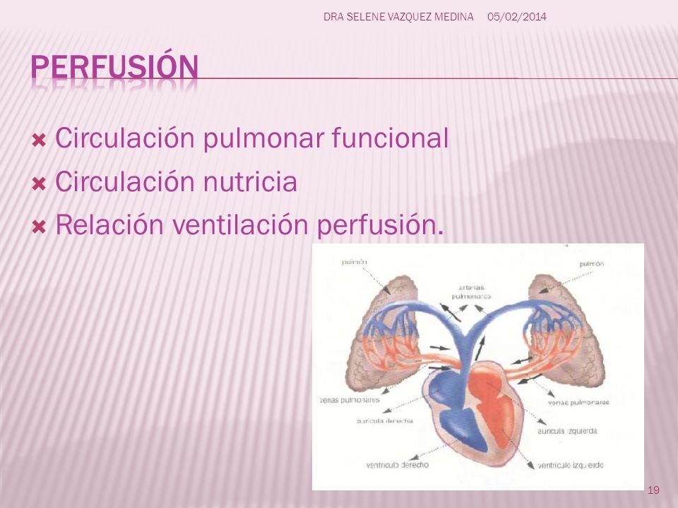 Circulación pulmonar funcional Circulación nutricia Relación ventilación perfusión. 19 DRA SELENE VAZQUEZ MEDINA05/02/2014