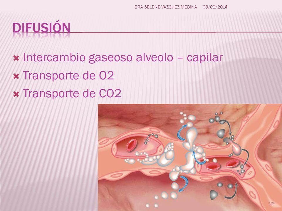 Intercambio gaseoso alveolo – capilar Transporte de O2 Transporte de CO2 23 DRA SELENE VAZQUEZ MEDINA05/02/2014