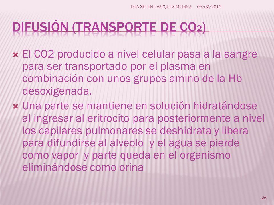 El CO2 producido a nivel celular pasa a la sangre para ser transportado por el plasma en combinación con unos grupos amino de la Hb desoxigenada. Una