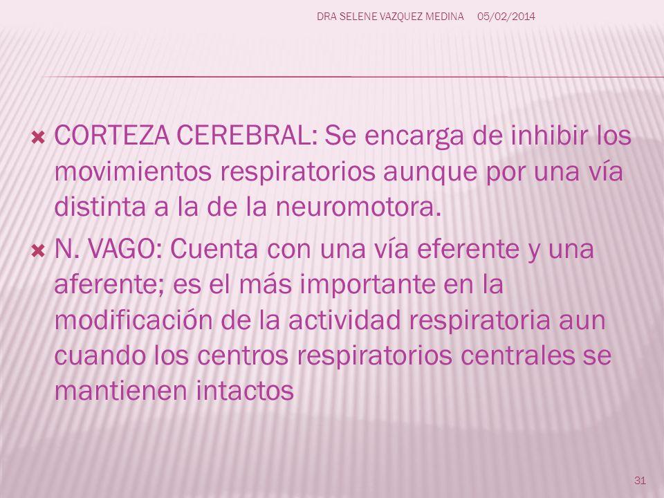 CORTEZA CEREBRAL: Se encarga de inhibir los movimientos respiratorios aunque por una vía distinta a la de la neuromotora. N. VAGO: Cuenta con una vía