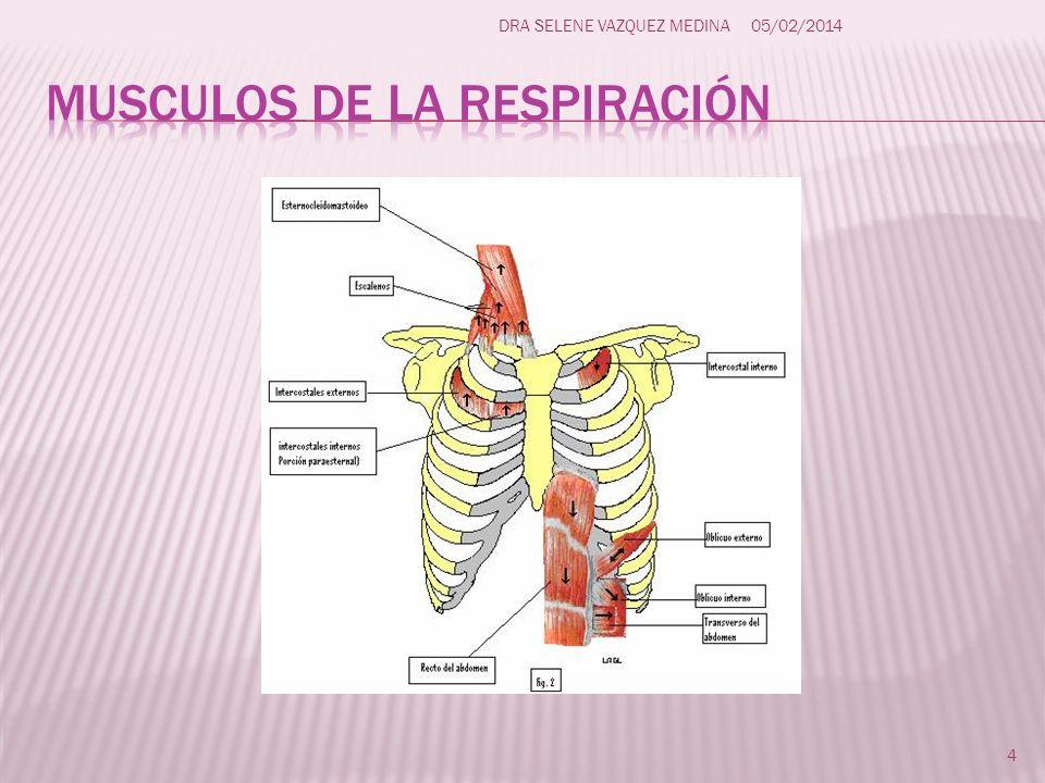 Al entrar el aire a los pulmones BAJA LA PRESION INTRAPULMONAR (n = 760 mmHg) y AUMENTA EL VOLUMEN PULMONAR.