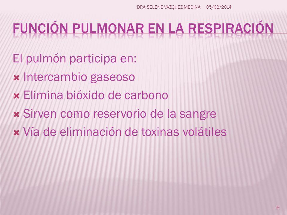 El pulmón participa en: Intercambio gaseoso Elimina bióxido de carbono Sirven como reservorio de la sangre Vía de eliminación de toxinas volátiles 8 D