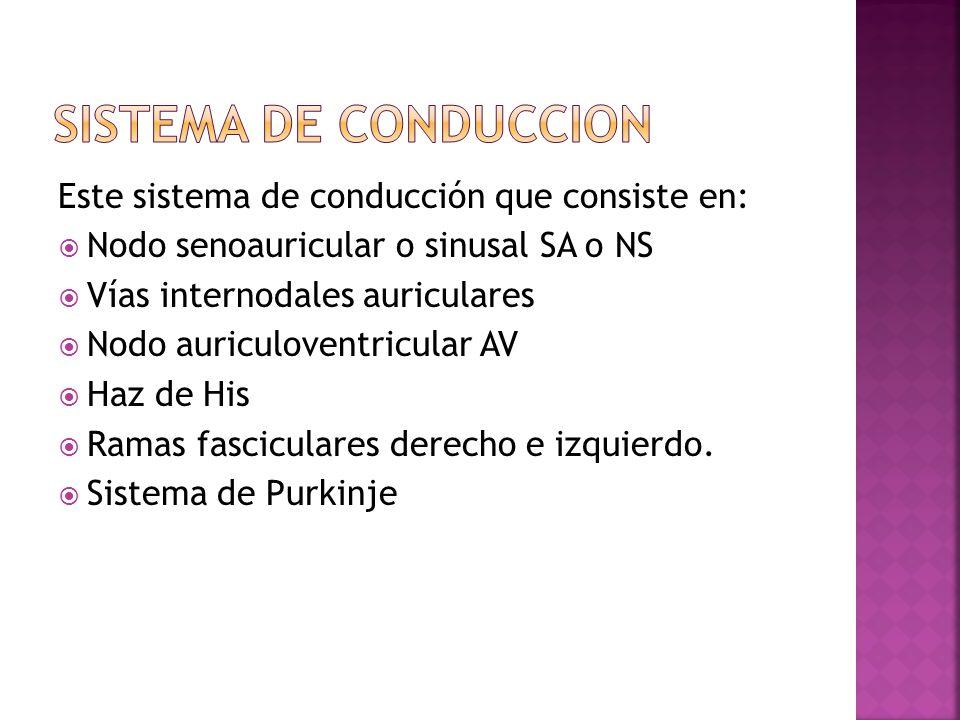 Este sistema de conducción que consiste en: Nodo senoauricular o sinusal SA o NS Vías internodales auriculares Nodo auriculoventricular AV Haz de His