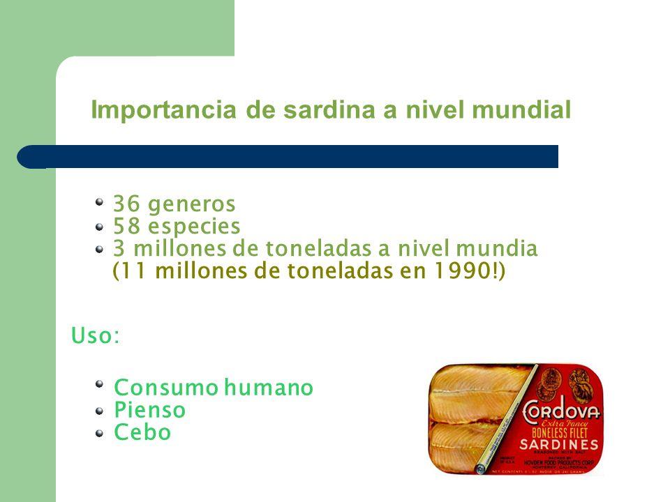 36 generos 58 especies 3 millones de toneladas a nivel mundia (11 millones de toneladas en 1990!) Uso: Consumo humano Pienso Cebo Importancia de sardi