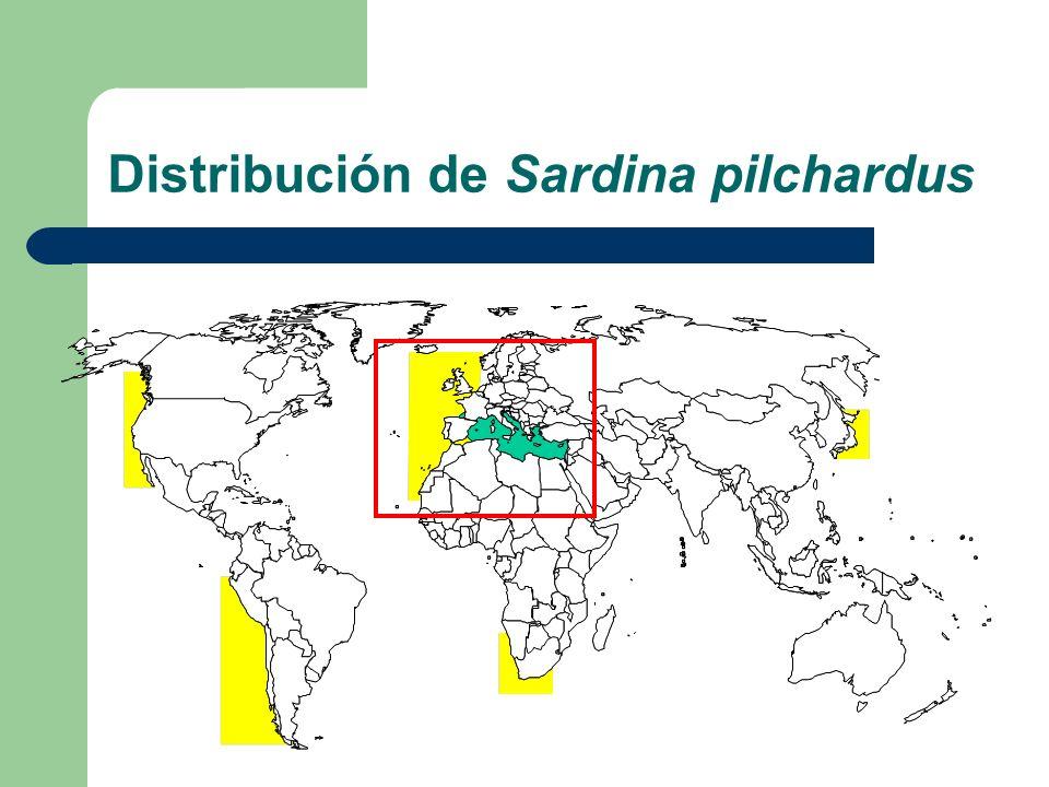 Distribución de Sardina pilchardus