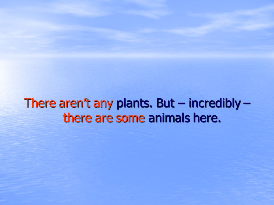 There arent any plants. But – incredibly – there are some animals here.