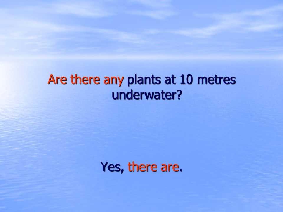 Are there any plants at 10 metres underwater? Yes, there are.