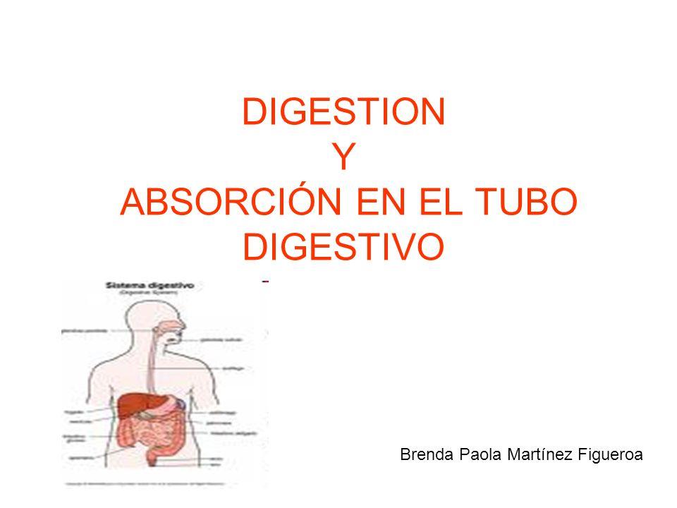 DIGESTION Y ABSORCIÓN EN EL TUBO DIGESTIVO Brenda Paola Martínez Figueroa