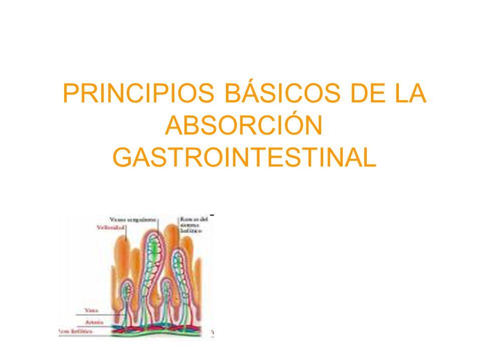 PRINCIPIOS BÁSICOS DE LA ABSORCIÓN GASTROINTESTINAL