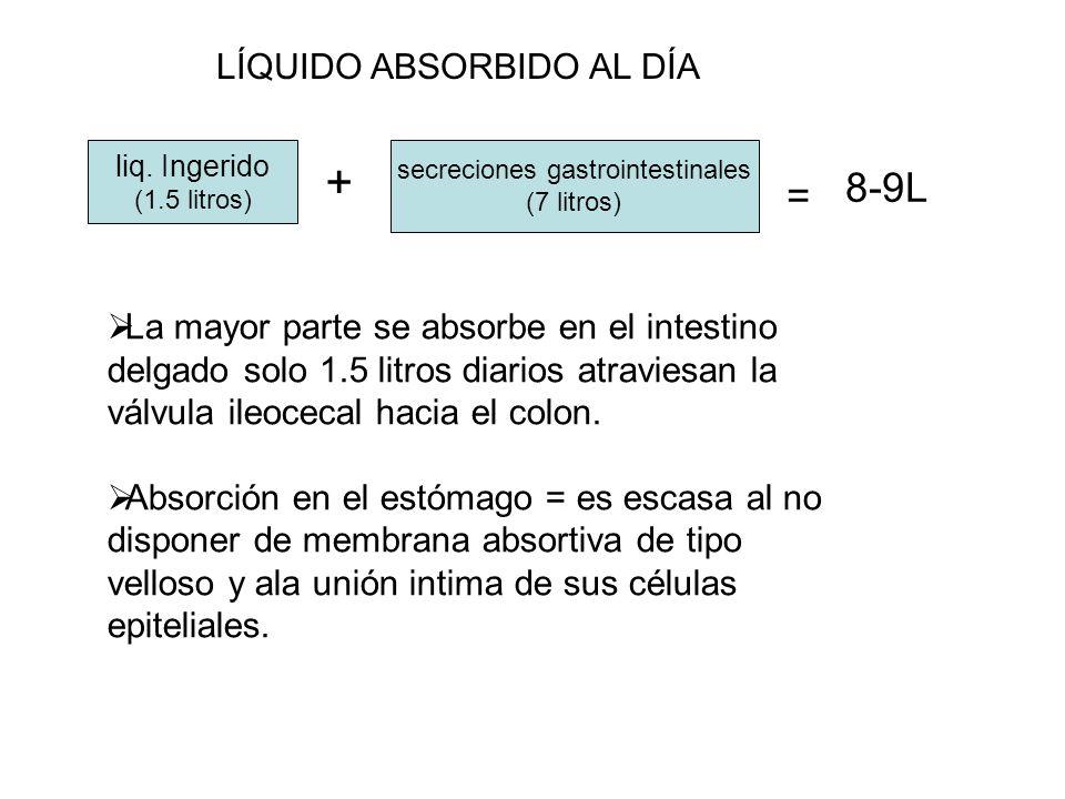 liq. Ingerido (1.5 litros) + secreciones gastrointestinales (7 litros) = 8-9L LÍQUIDO ABSORBIDO AL DÍA La mayor parte se absorbe en el intestino delga