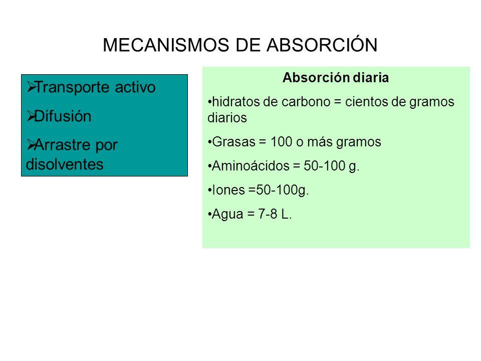 MECANISMOS DE ABSORCIÓN Transporte activo Difusión Arrastre por disolventes Absorción diaria hidratos de carbono = cientos de gramos diarios Grasas =