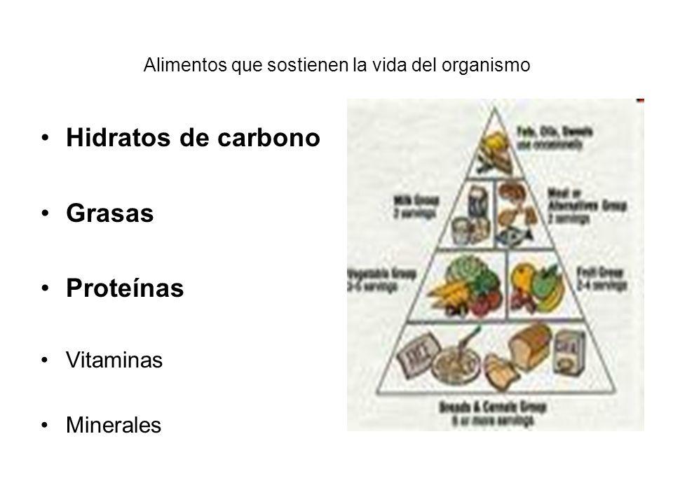 Alimentos que sostienen la vida del organismo Hidratos de carbono Grasas Proteínas Vitaminas Minerales