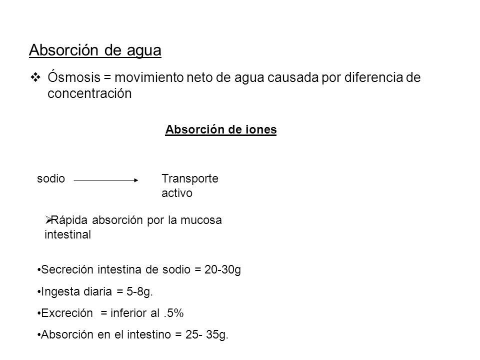 Absorción de agua Ósmosis = movimiento neto de agua causada por diferencia de concentración Absorción de iones sodioTransporte activo Secreción intest