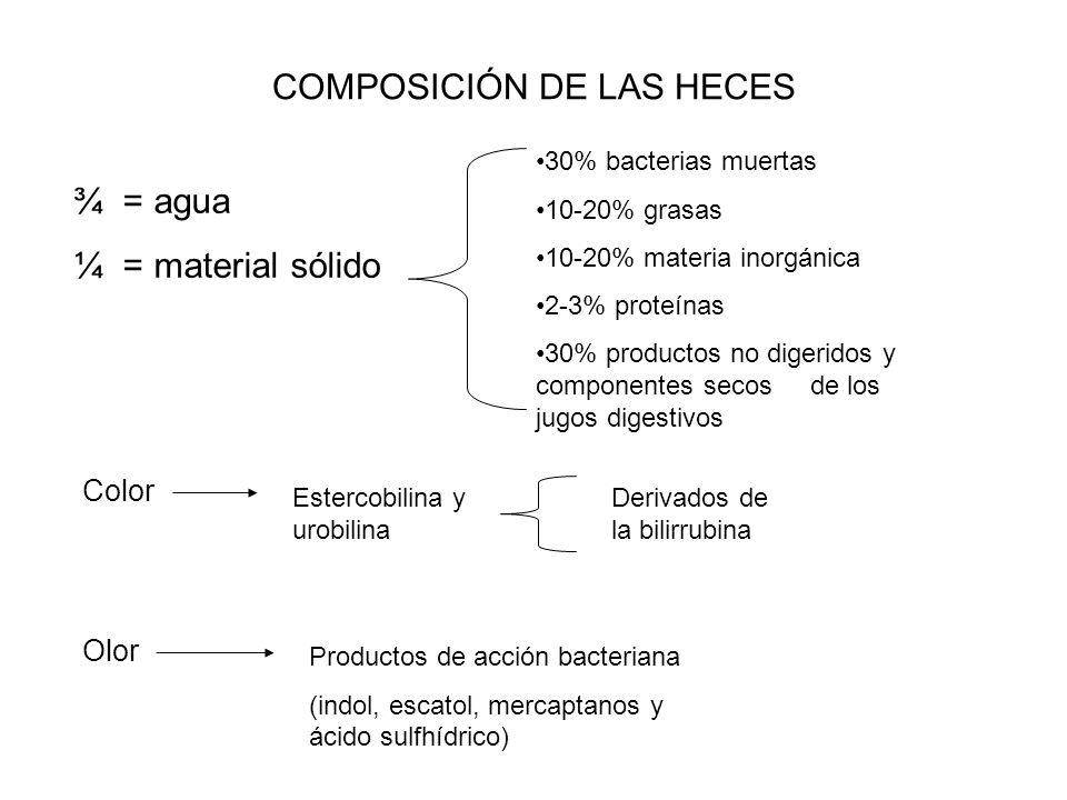 COMPOSICIÓN DE LAS HECES ¾ = agua ¼ = material sólido 30% bacterias muertas 10-20% grasas 10-20% materia inorgánica 2-3% proteínas 30% productos no di