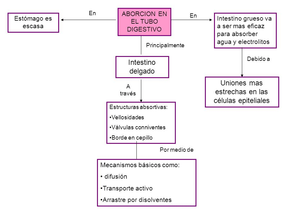 ABORCION EN EL TUBO DIGESTIVO Estructuras absortivas: Vellosidades Válvulas conniventes Borde en cepillo A través Mecanismos básicos como: difusión Tr
