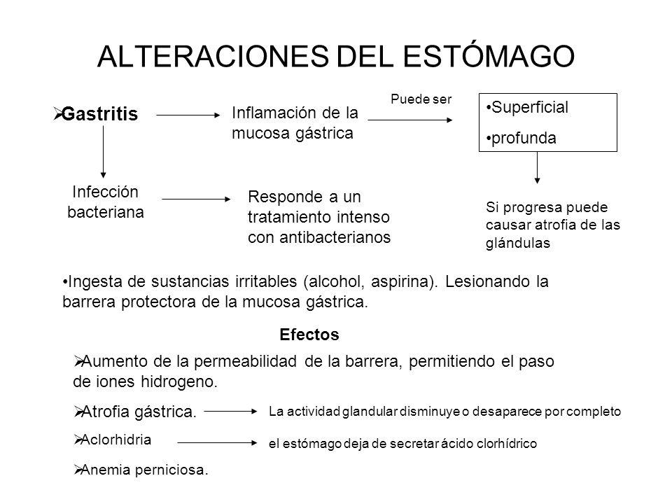 ALTERACIONES DEL ESTÓMAGO Gastritis Inflamación de la mucosa gástrica Superficial profunda Puede ser Si progresa puede causar atrofia de las glándulas