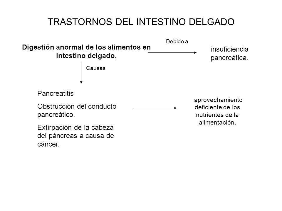 TRASTORNOS DEL INTESTINO DELGADO Digestión anormal de los alimentos en intestino delgado, Pancreatitis Obstrucción del conducto pancreático. Extirpaci