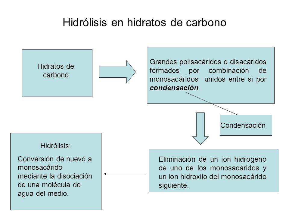 Hidrólisis en hidratos de carbono Hidratos de carbono Grandes polisacáridos o disacáridos formados por combinación de monosacáridos unidos entre si po