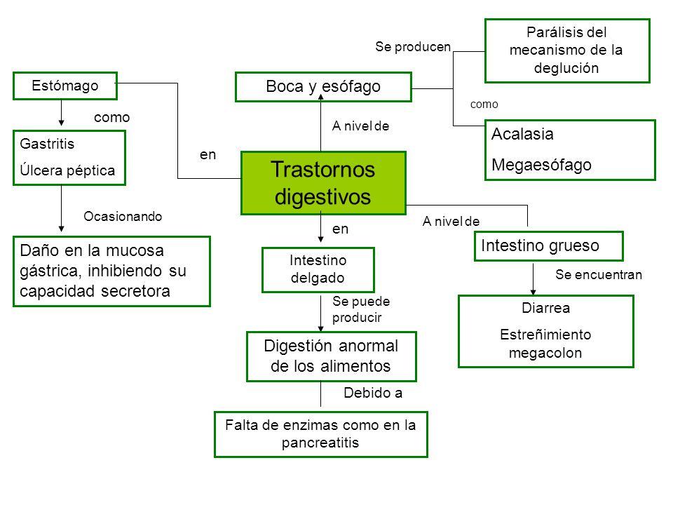 Trastornos digestivos Boca y esófago A nivel de Parálisis del mecanismo de la deglución Acalasia Megaesófago como Estómago en Gastritis Úlcera péptica
