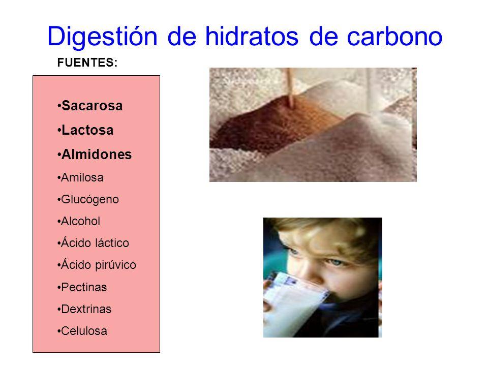 Digestión de hidratos de carbono Sacarosa Lactosa Almidones Amilosa Glucógeno Alcohol Ácido láctico Ácido pirúvico Pectinas Dextrinas Celulosa FUENTES