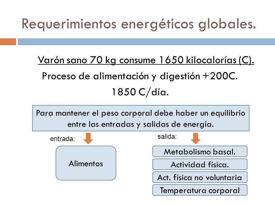 Requerimientos energéticos globales. Varón sano 70 kg consume 1650 kilocalorías (C). Proceso de alimentación y digestión +200C. 1850 C/día. Para mante