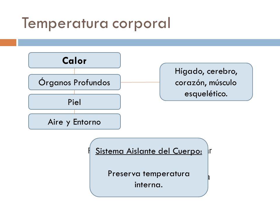 Temperatura corporal Calor Órganos Profundos Piel Aire y Entorno Hígado, cerebro, corazón, músculo esquelético. Rapidez de conducción desde lugar de p