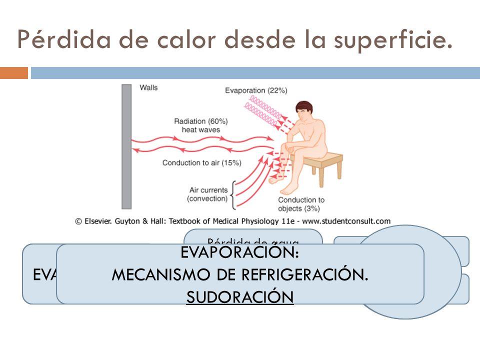 Pérdida de calor desde la superficie. RADIACIÓN Pérdida de calor en forma de rayos infrarrojos 60% CONDUCCIÓN Objetos sólidos Convección 3% 15% EVAPOR