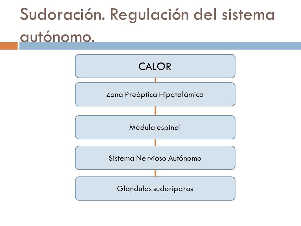 Sudoración. Regulación del sistema autónomo. Zona Preóptica Hipotalámica CALOR Médula espinal Sistema Nervioso Autónomo Glándulas sudoríparas