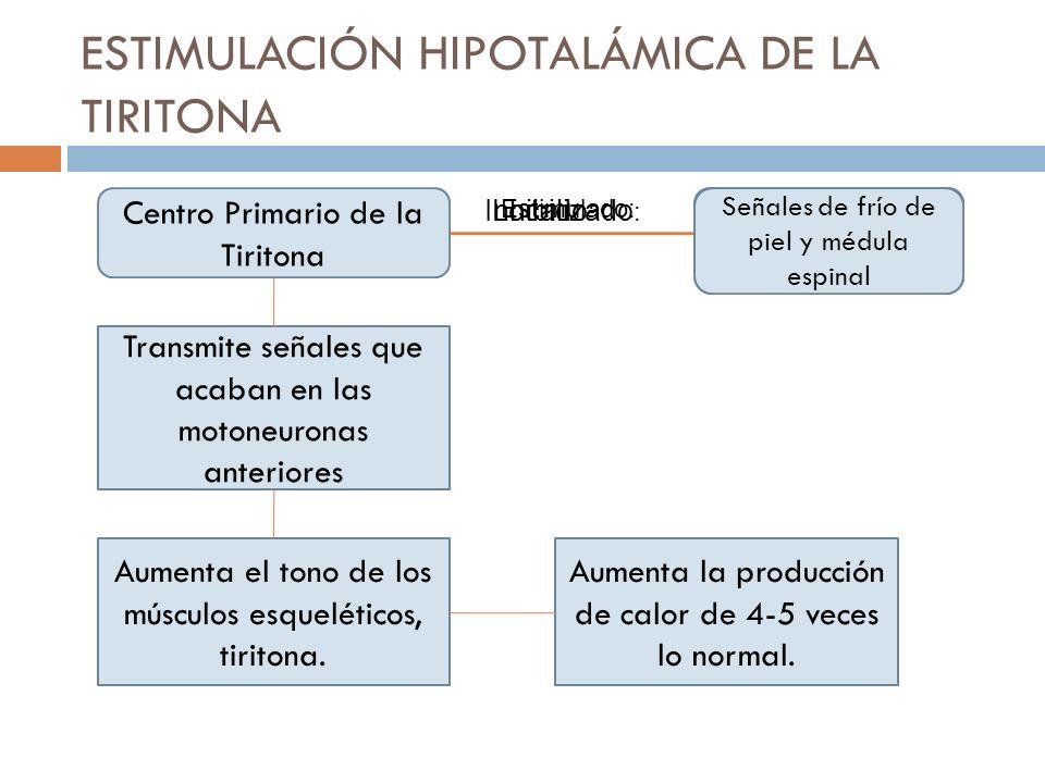 ESTIMULACIÓN HIPOTALÁMICA DE LA TIRITONA Centro Primario de la Tiritona Porción dorsomedial del hipotálamo Localizado : Centro Calor Hipotálamo anteri