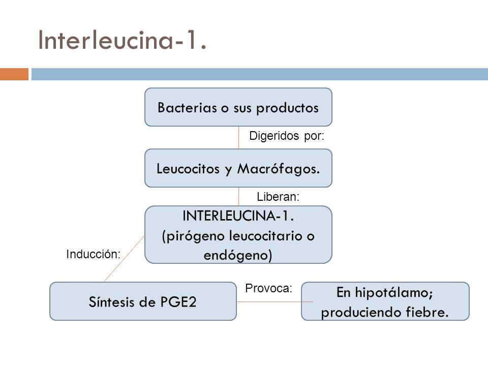 Interleucina-1. Bacterias o sus productos Leucocitos y Macrófagos. INTERLEUCINA-1. (pirógeno leucocitario o endógeno) Síntesis de PGE2 En hipotálamo;