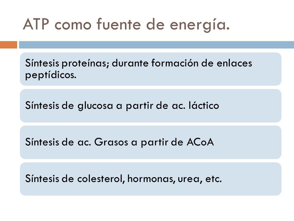 ATP como fuente de energía. Síntesis proteínas; durante formación de enlaces peptídicos. Síntesis de glucosa a partir de ac. lácticoSíntesis de ac. Gr