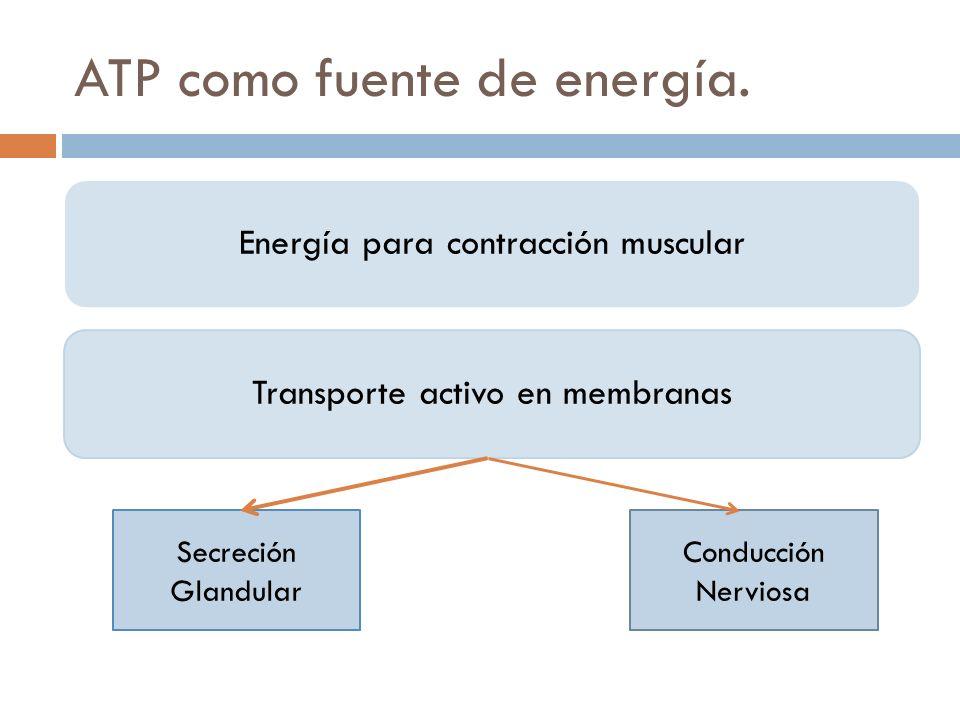ATP como fuente de energía. Energía para contracción muscularTransporte activo en membranas Secreción Glandular Conducción Nerviosa
