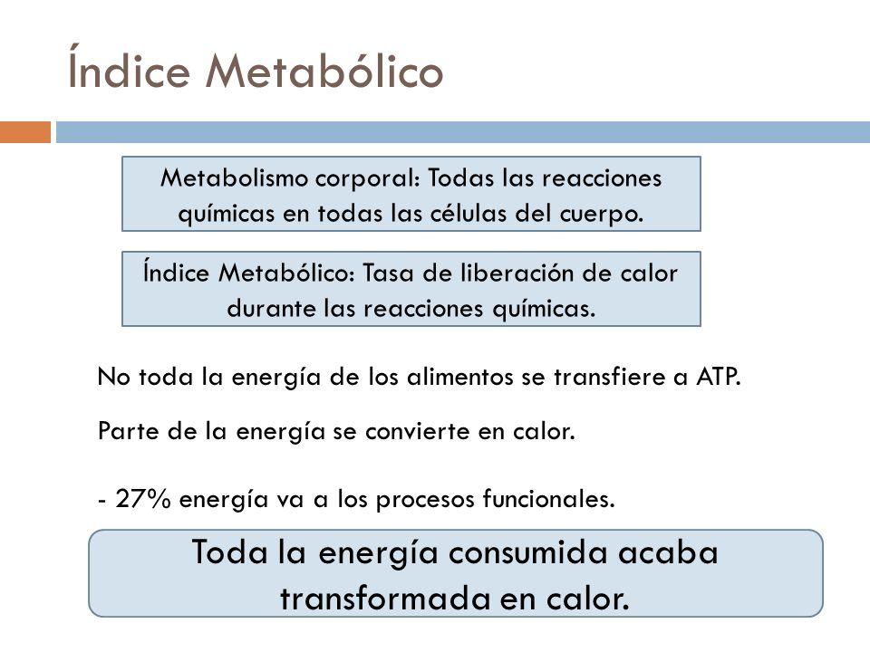 Índice Metabólico Metabolismo corporal: Todas las reacciones químicas en todas las células del cuerpo. Índice Metabólico: Tasa de liberación de calor