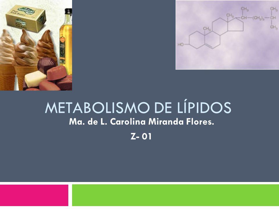 METABOLISMO DE LÍPIDOS Ma. de L. Carolina Miranda Flores. Z- 01