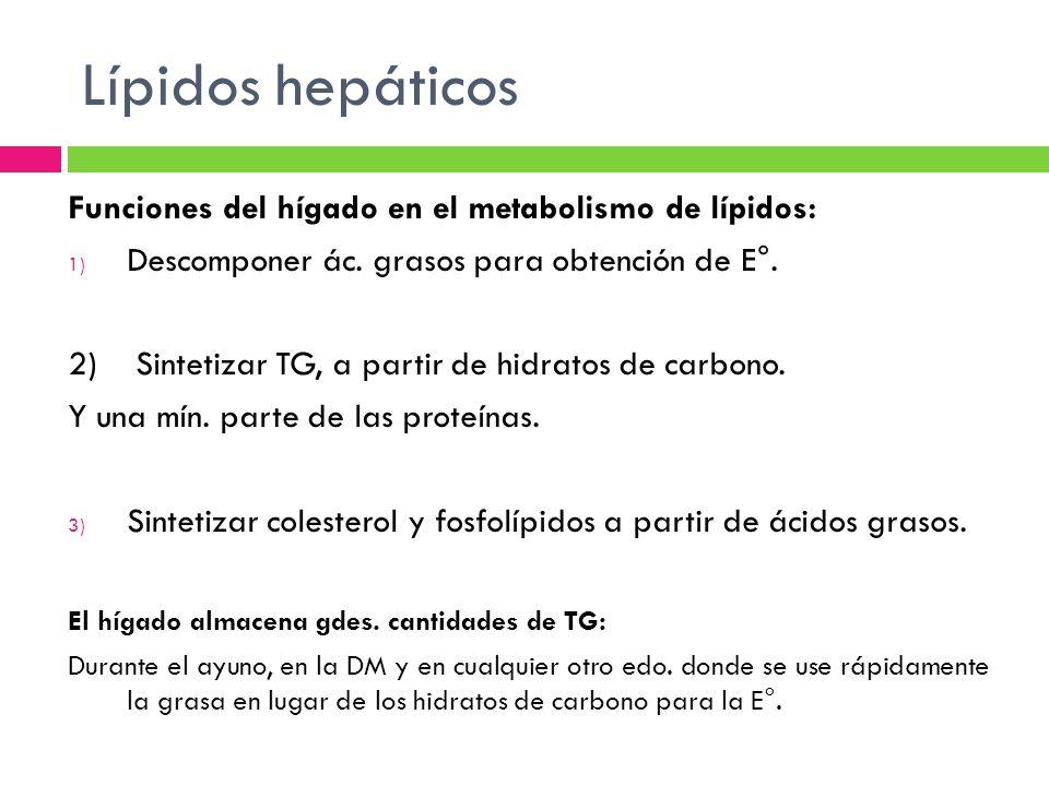 Lípidos hepáticos Funciones del hígado en el metabolismo de lípidos: 1) Descomponer ác. grasos para obtención de E°. 2) Sintetizar TG, a partir de hid