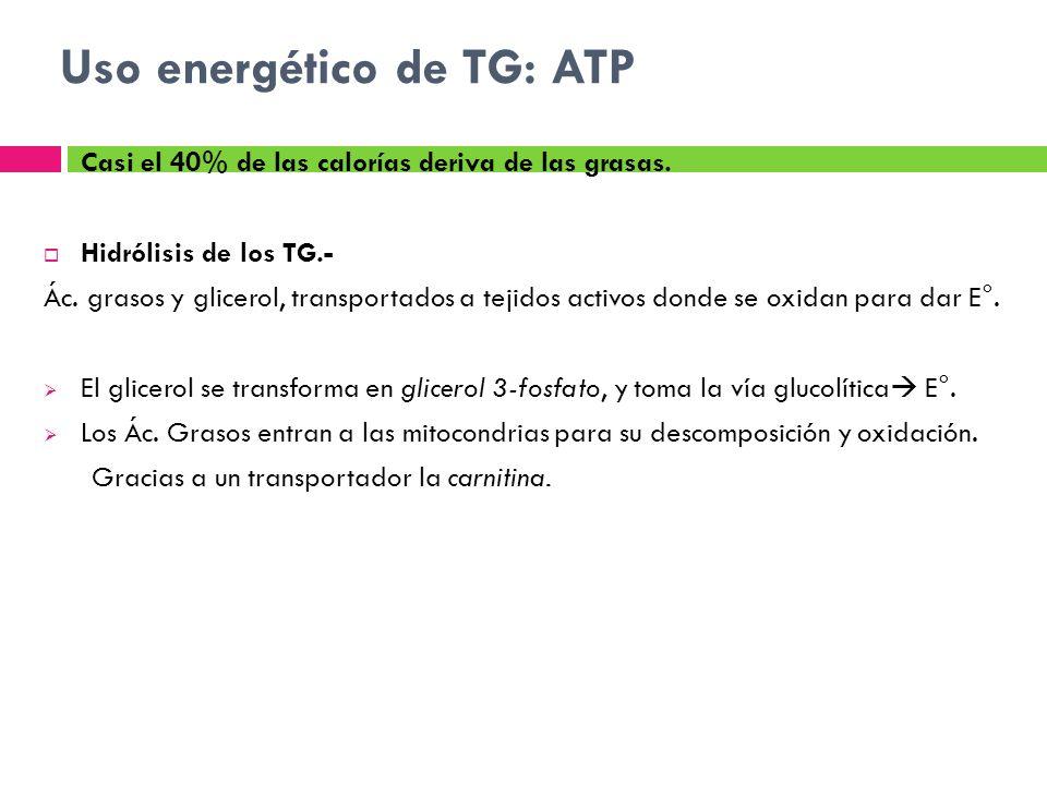 Uso energético de TG: ATP Casi el 40% de las calorías deriva de las grasas. Hidrólisis de los TG.- Ác. grasos y glicerol, transportados a tejidos acti