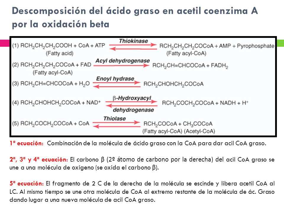 Descomposición del ácido graso en acetil coenzima A por la oxidación beta 1ª ecuación: Combinación de la molécula de ácido graso con la CoA para dar a
