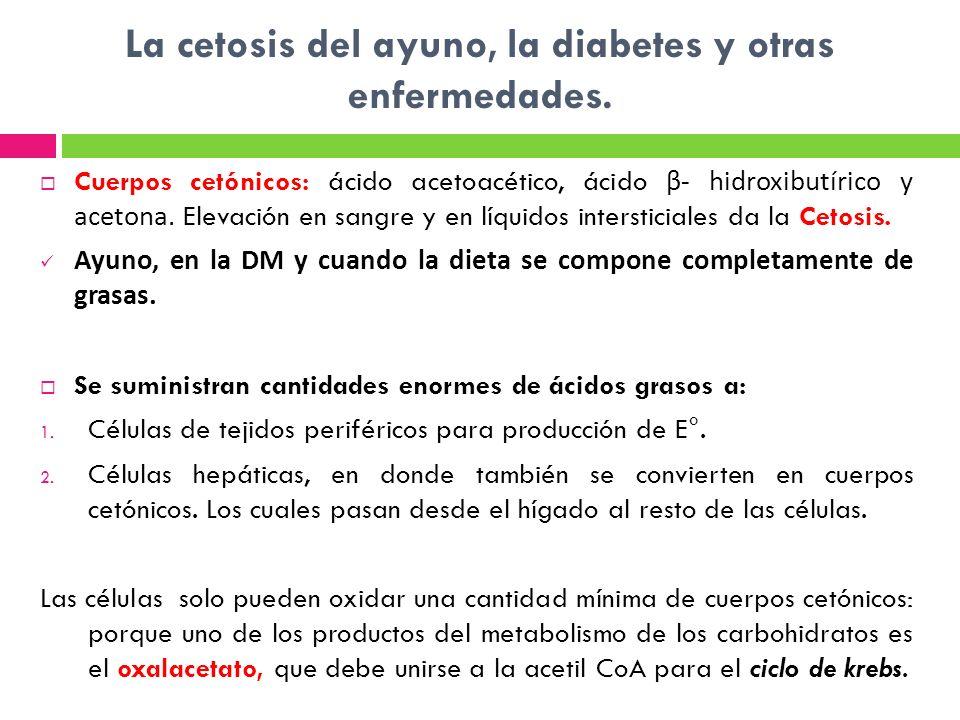La cetosis del ayuno, la diabetes y otras enfermedades. Cuerpos cetónicos: ácido acetoacético, ácido β- hidroxibutírico y acetona. Elevación en sangre