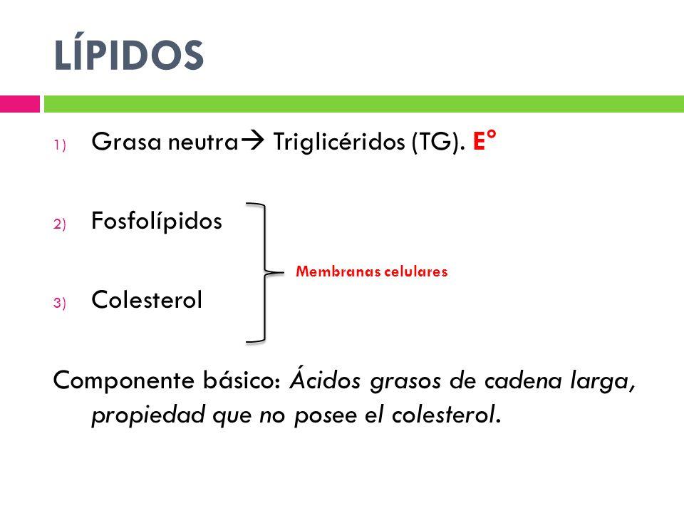 LÍPIDOS 1) Grasa neutra Triglicéridos (TG). E° 2) Fosfolípidos 3) Colesterol Componente básico: Ácidos grasos de cadena larga, propiedad que no posee