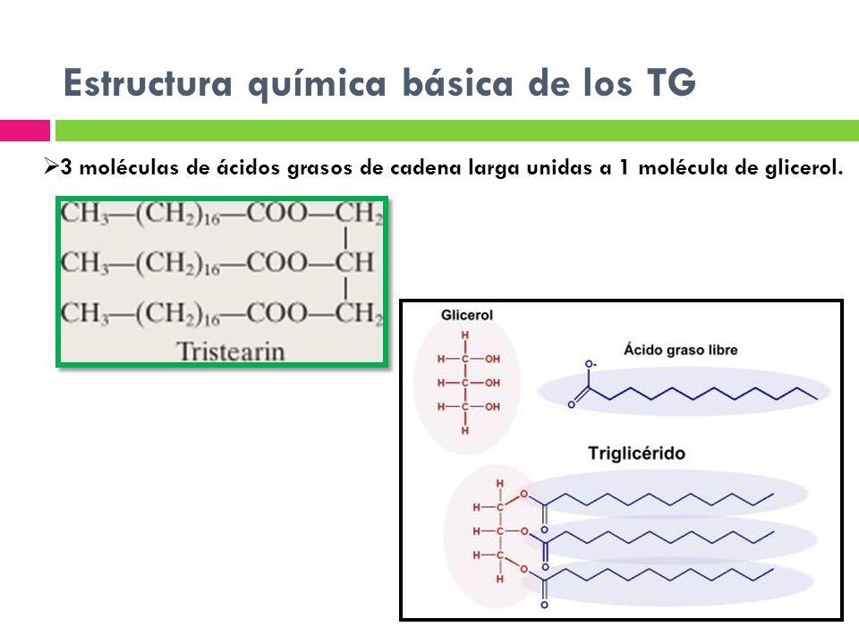 Estructura química básica de los TG 3 moléculas de ácidos grasos de cadena larga unidas a 1 molécula de glicerol.