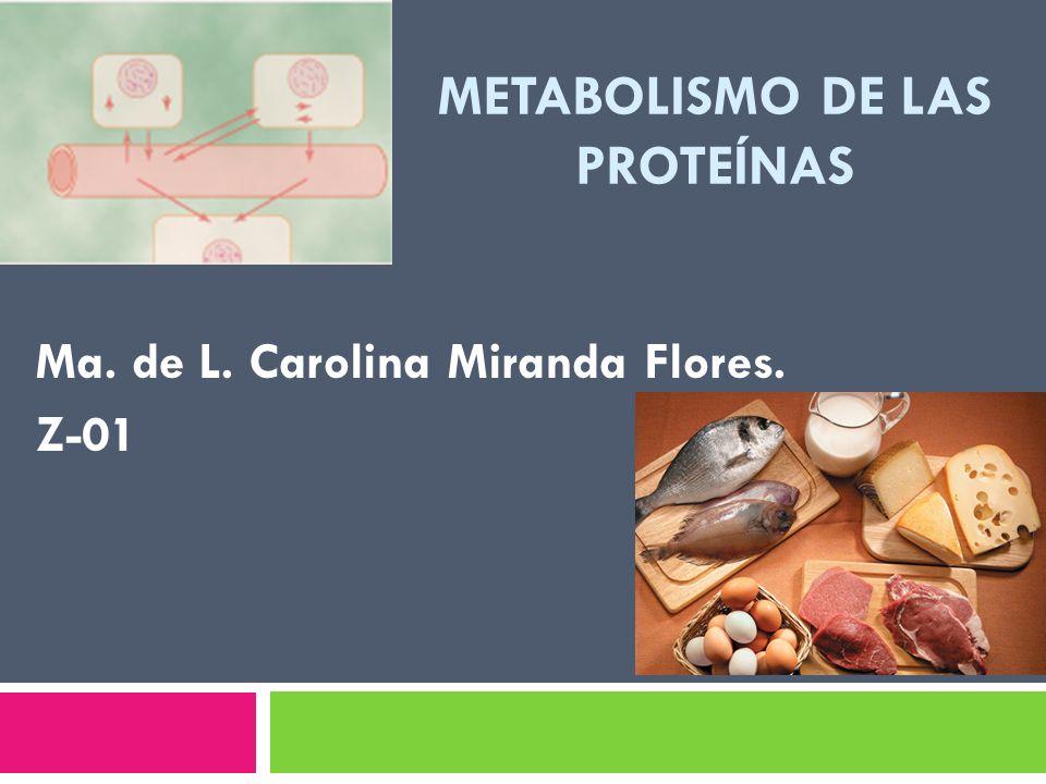 METABOLISMO DE LAS PROTEÍNAS Ma. de L. Carolina Miranda Flores. Z-01