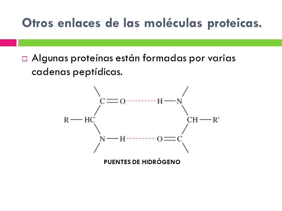 Otros enlaces de las moléculas proteicas. Algunas proteínas están formadas por varias cadenas peptídicas. PUENTES DE HIDRÓGENO